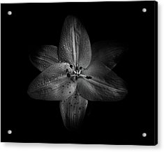 Acrylic Print featuring the photograph Backyard Flowers In Black And White 28 by Brian Carson