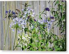 Backyard Flowers Acrylic Print