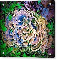 Backyard Mushroom  Acrylic Print