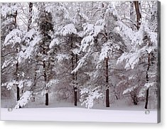 Acrylic Print featuring the photograph Backyard Trees by Don Nieman