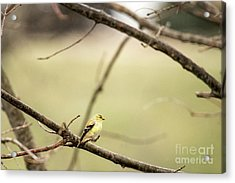 Backyard Yellow Acrylic Print