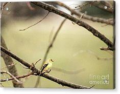 Backyard Yellow Acrylic Print