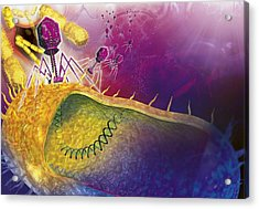 Bacteriophages Attacking Bacteria Acrylic Print by Claus Lunau