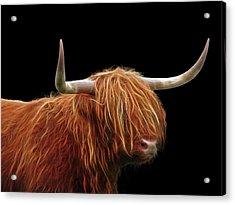 Bad Hair Day - Highland Cow - On Black Acrylic Print by Gill Billington