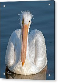Bad Hair Day Acrylic Print by Sally Mitchell