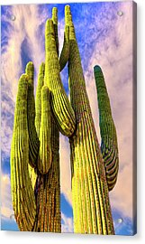 Acrylic Print featuring the photograph Bad Hombre by Paul Wear