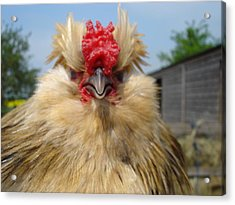 Bad Tempered Bearded Bantam Acrylic Print