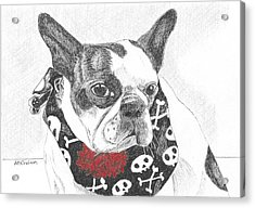 Acrylic Print featuring the drawing Bad To The Bone by Arlene Crafton