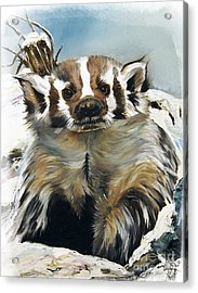 Badger - Guardian Of The South Acrylic Print