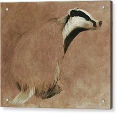 Badger Acrylic Print