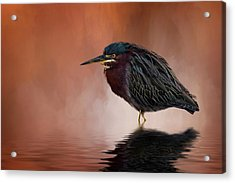 Bah, Humbug Acrylic Print by Cyndy Doty