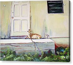 Bahama Goat Acrylic Print by Patricia Piffath