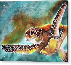 Bahamian Turtle Dove Acrylic Print