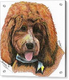 Bailey, II Acrylic Print