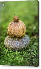 Acrylic Print featuring the photograph Balance With Nature by Dale Kincaid