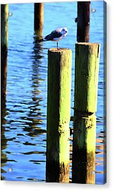 Acrylic Print featuring the photograph Balanced by Jan Amiss Photography