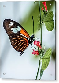 Balancing Act Acrylic Print by Andrea  OConnell