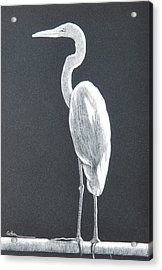Balancing Act Acrylic Print by Diane Cutter