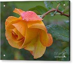 Balboa Rose Acrylic Print