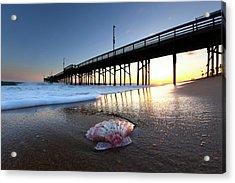 Balboa Shell. Acrylic Print by Sean Davey