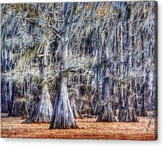 Bald Cypress In Caddo Lake Acrylic Print
