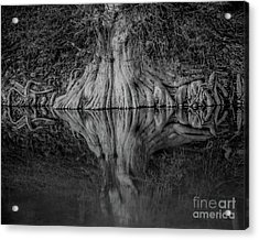 Bald Cypress Reflection In Black And White Acrylic Print