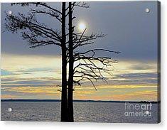 Bald Cypress Silhouette Acrylic Print