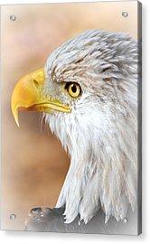 Bald Eagle 15 Acrylic Print by Marty Koch