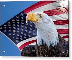 Bald Eagle And American Flag Acrylic Print