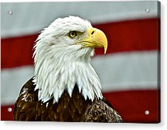 Bald Eagle And Old Glory Acrylic Print