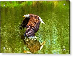 Bald Eagle Cutting The Water Acrylic Print
