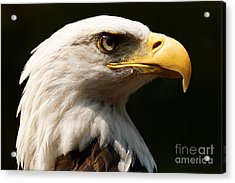 Bald Eagle Delight Acrylic Print