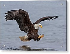 Bald Eagle Diving For Fish In Falling Snow Acrylic Print
