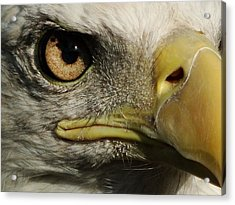 Bald Eagle Eye Acrylic Print