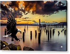 Bald Eagle Landing At Beach As Sun Sets Acrylic Print