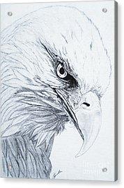Bald Eagle Acrylic Print by Nancy Rucker