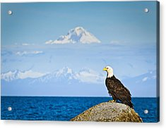 Bald Eagle Perched On A Rock Acrylic Print