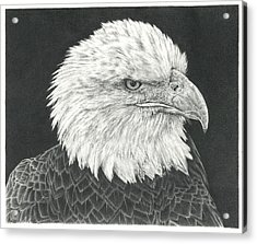 Bald Eagle Acrylic Print by Remrov
