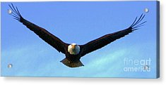 Bald Eagle Victory Acrylic Print by Dean Edwards