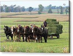 Baling The Hay Acrylic Print