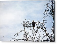 Acrylic Print featuring the photograph Balk Eagle by Rebecca Cozart
