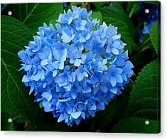 Acrylic Print featuring the photograph Ball Of Blue by Michiale Schneider