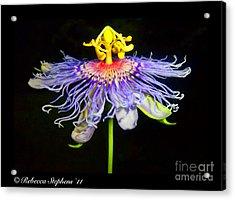 Ballet Acrylic Print by Rebecca Stephens
