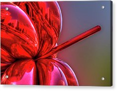 Balloon Flower Acrylic Print by Paul Wear