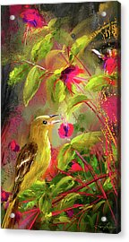 Baltimore Oriole Art- Baltimore Female Oriole Art Acrylic Print by Lourry Legarde