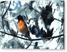 Baltimore Orioles Dream Acrylic Print by Nancy TeWinkel Lauren