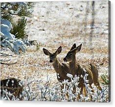 Bambi And Bimbo Acrylic Print