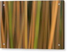 Bamboo Abstract Acrylic Print by Carolyn Dalessandro