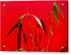 Bamboo Against Red Wall Acrylic Print