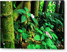 Bamboo And Impatiens El Yunque National Forest Acrylic Print by Thomas R Fletcher